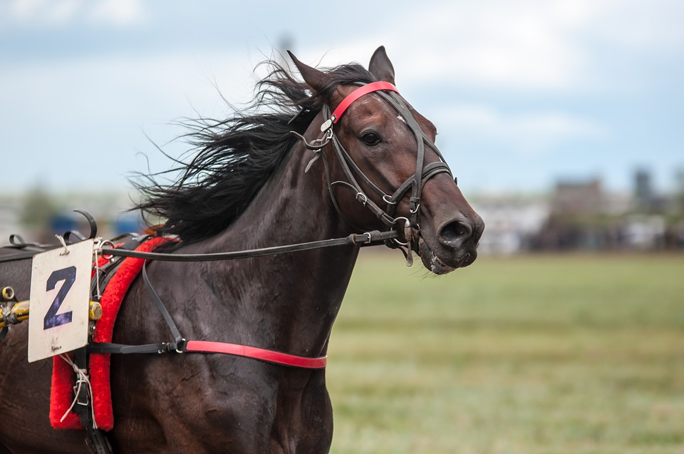 race-horse-2-brown